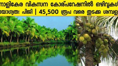 Photo of Coconut Development Board, Kochi Recruitment for Dy Director Posts